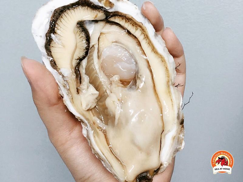หอยนางรมฮิโรชิมา (แบบสด)